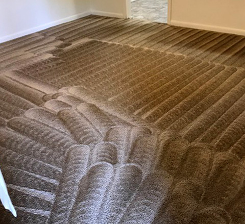 Tallahassee Carpet Cleaning