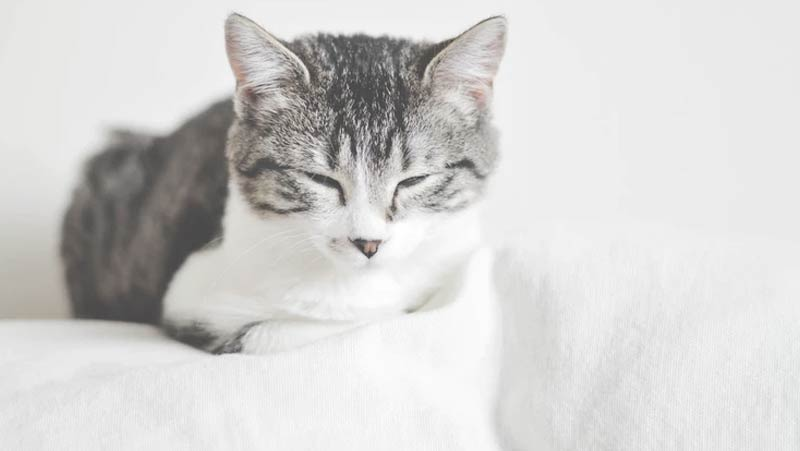 Cat Stains Carpet Cleaning Tallahassee